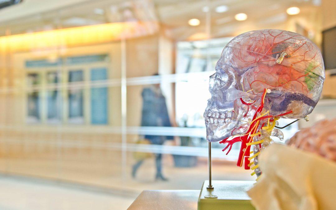 Building Better Brains